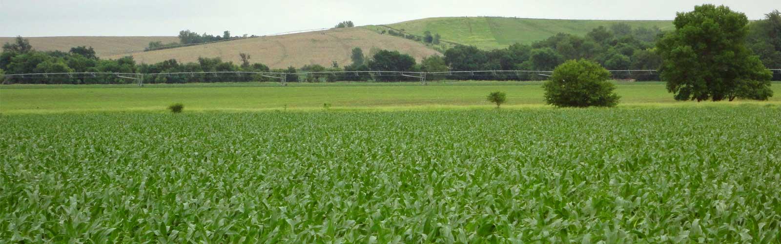 slider-corn